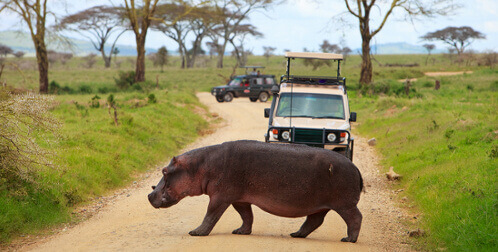 Hippo showing opinons can get in the way